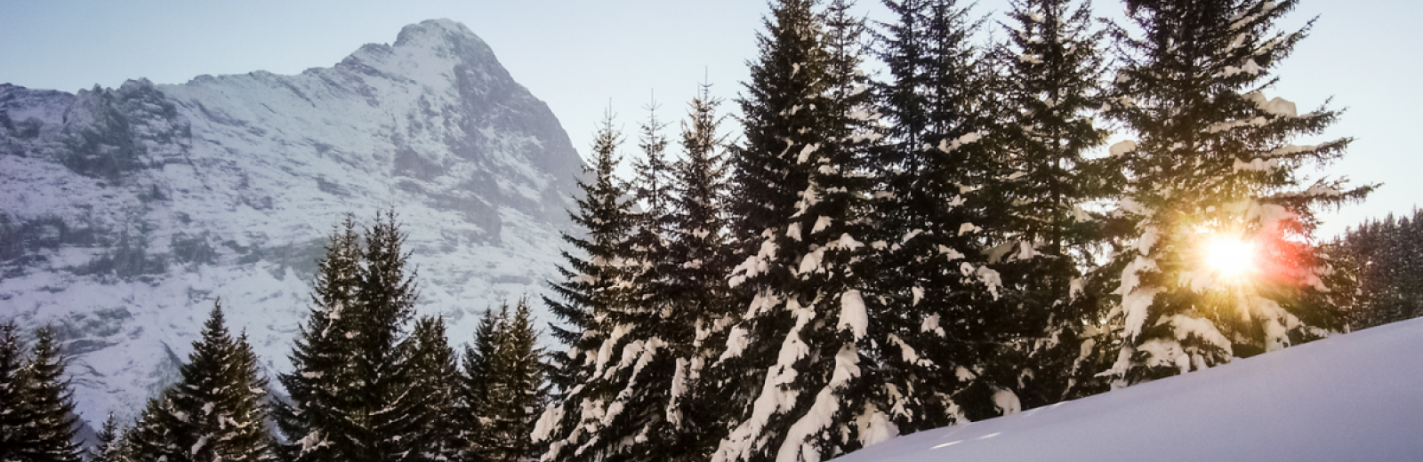 1.	Snow-capped woods in Grindelwald with the Eiger in the background. © FOEN